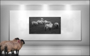 John Finn - Gallery
