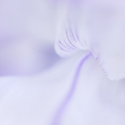 Niamh Whitty - Simplicity