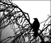2nd-monochrome-print-virginia-kelleher